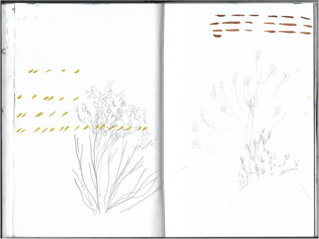 a photograph of an open artist sketch book with drawings and marks that look like notation
