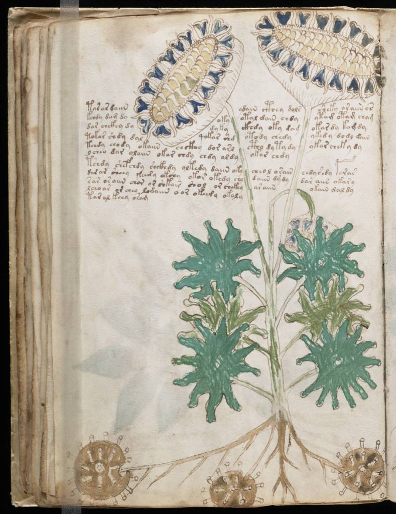 a page from the Voynich manuscript showing a drawing of a large flower with handwritten text in an unknown alphabet